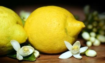 citron fruit + fleur citrus limon